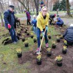 Anna Ruszewska, radna Rady Miejskiej w Suwałkach i wolontariusze sadzą trzmielinę w parku Konstytucji 3 Maja