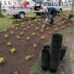 Wolontariusze sadzą trzmielinę w parku Konstytucji 3 Maja